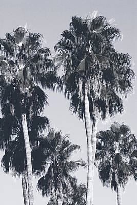 Black And White Art Mixed Media - Palm Springs Palm Trees- Art By Linda Woods by Linda Woods