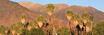 Photograph - Palm Springs Palms by Lisa Dunn