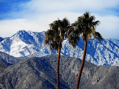 Photograph - Palm Springs Winter 4 by Ron Kandt