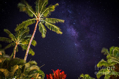 Photograph - Palm Stars by Anthony Bonafede