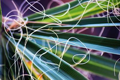 Palm Strings Art Print