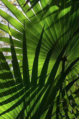 Photograph - Palm Study 1 by Dana Sohr