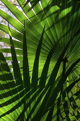 Photograph - Palm Study 1 by Dana Sohr