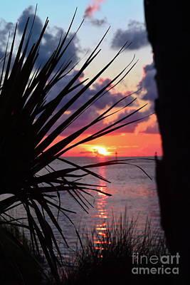 Photograph - Palm Sunset B.p.st Park by Expressionistart studio Priscilla Batzell