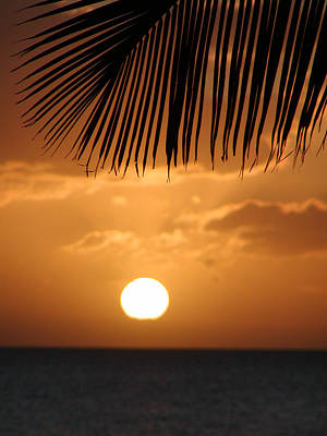 Palm Sunset Hawaii Art Print by Dustin K Ryan
