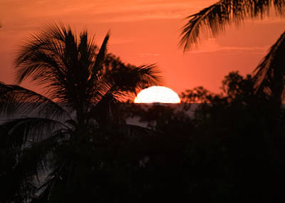 Photograph - Palm Sunset by Jim DeLillo