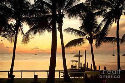 Palms Photograph - Palm Sunset by Judy Kay