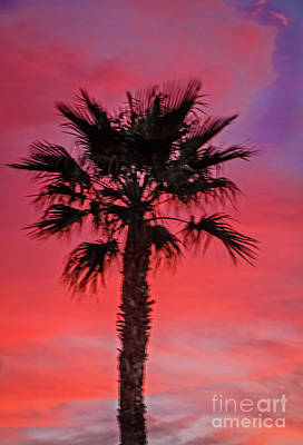Mixed Media - Palm Sunset by Robert Bales