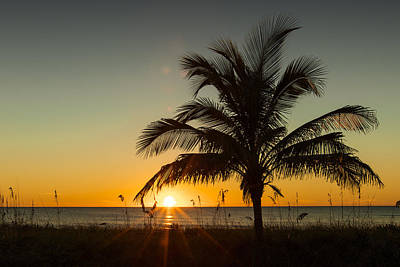Photograph - Palm Sunset by Sean Allen