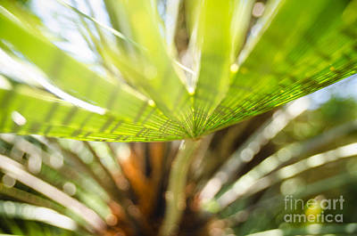 Photograph - Palm Tree 2 by Andrea Anderegg
