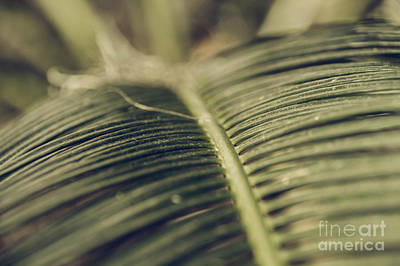Photograph - Palm Tree 6 by Andrea Anderegg