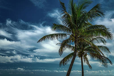 Photograph - Palm Tree Against The Sky by Rick Strobaugh