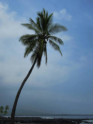 Photograph - Palm Tree All Alone by Pamela Walton