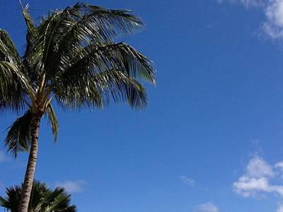 Photograph - Palm Tree  by Alohi Fujimoto