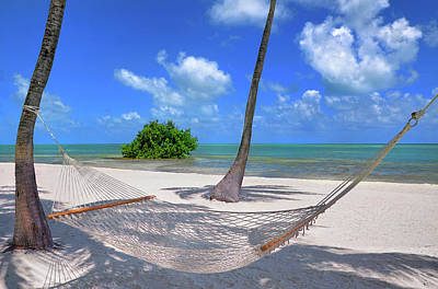 Photograph - Palm Tree And Hammock In Florida Keys by Justin Kelefas