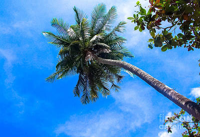 Photograph - Palm Tree by Andrea Anderegg