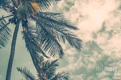 Photograph - Palm Tree by Anna Om