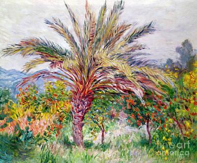 Palm Tree At Bordighera Print by Claude Monet
