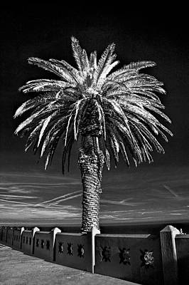 Photograph - Palm Tree At Point Fermin In Los Angeles California In Black And White Infrared by Randall Nyhof