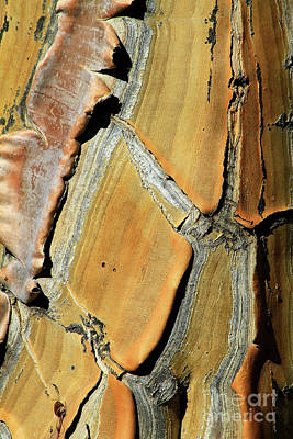 Photograph - Palm Tree Bark Abstract by Teresa Zieba
