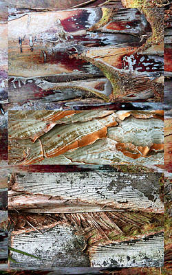 Photograph - Palm Tree Bark Design by Jessica Jenney