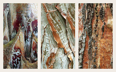 Photograph - Palm Tree Bark Triptych by Jessica Jenney