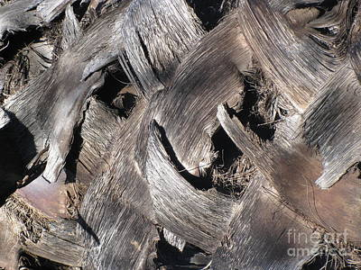 Photograph - Palm Tree Bark by Karen Sydney