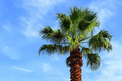 Photograph - Palm Tree, Blue Sky, Wispy Clouds by Ram Vasudev