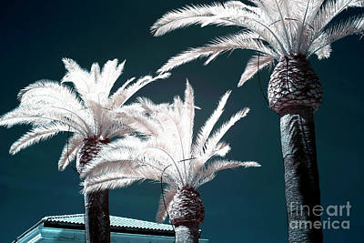 Photograph - Palm Tree Blues In Sorrento by John Rizzuto