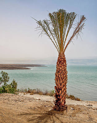 Photograph - Palm Tree By The Dead Sea by Endre Balogh