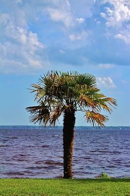 Photograph - Palm Tree By The Lake by Cynthia Guinn