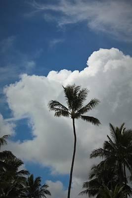 Photograph - Palm Tree by Carolyn Ricks