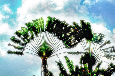 Photograph - Palm Tree Composition by Joseph Hollingsworth