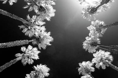 Infra-red Photograph - Palm Tree Convergence by Sean Davey