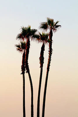 Photograph - Palm Tree Dance by Art Block Collections