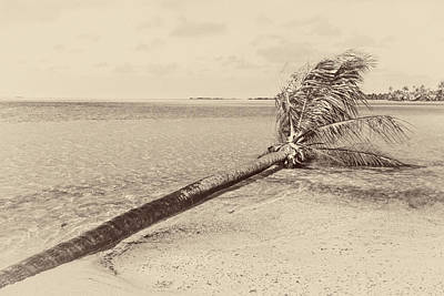 Photograph - Palm Tree Down Vintage by Stulaine Studios