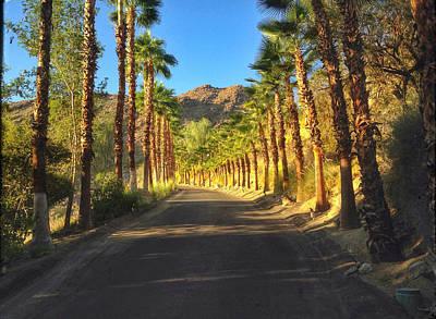 Photograph - Palm Tree Drive by Dan Reich