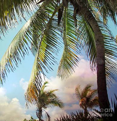 Photograph - Palm Tree by France Laliberte
