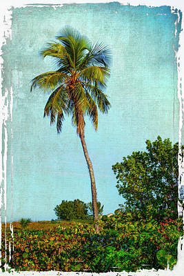 Photograph - Palm Tree Ft Myers Fl_dsc00702_16 by Greg Kluempers
