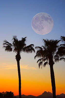 Photograph - Palm Tree Full Moon Sunset by James BO Insogna