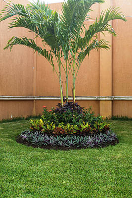 Photograph - Palm Tree Garden by James Gay