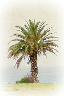 Palm Tree In Coastal California In A Retro Style Art Print