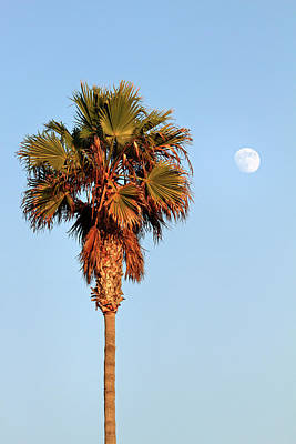 Photograph - Palm Tree In Huntington Beach by Pierre Leclerc Photography
