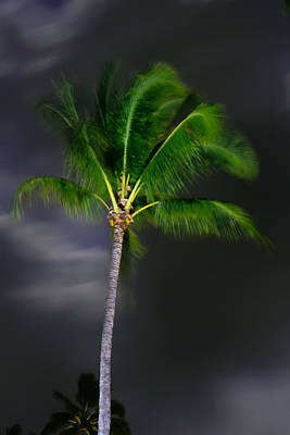 Photograph - Palm Tree In Moonlight by Roger Mullenhour
