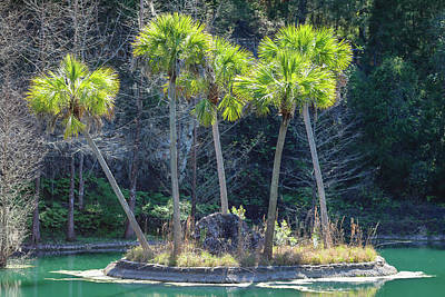 Photograph - Palm Tree Island by Raphael Lopez
