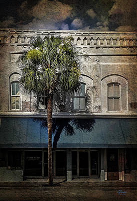 Photograph - Palm Tree by Jim Ziemer