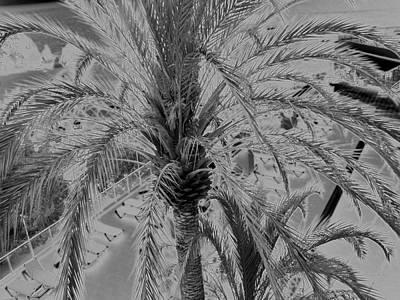 Palm Tree Art Print by John Bradburn