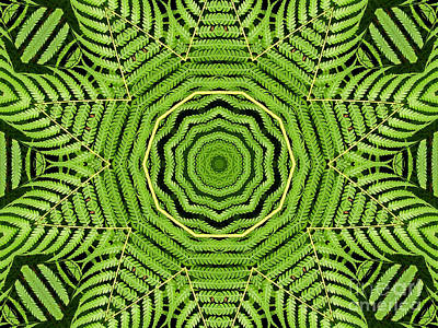 Botanicals Photograph - Palm Tree Kaleidoscope Abstract by Rose Santuci-Sofranko