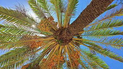 Outerspace Patenets Rights Managed Images - Palm tree kinda day Royalty-Free Image by Denise Viesta