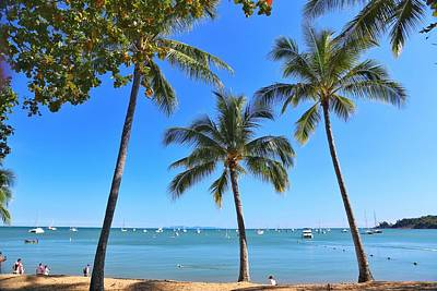Photograph - Palm Tree Lined Beach At Horseshoe Bay On Magnetic Island by Keiran Lusk